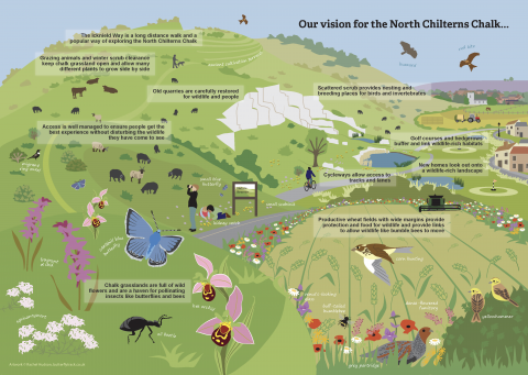 Our vision for the North Chilterns Chalk