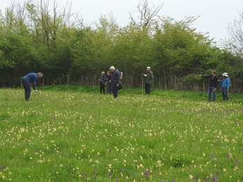 Volunteers counting orchids at Chettisham Meadow