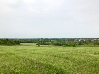 A view from Crow Hill across green grass and trees