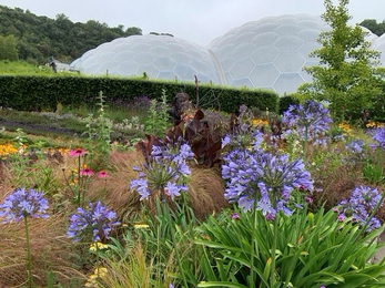 A view of flowers at the Eden Project