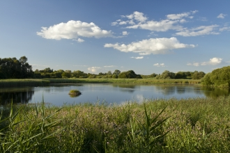 Image: Woodwalton Fen - Mark Hamblin/2020VISION