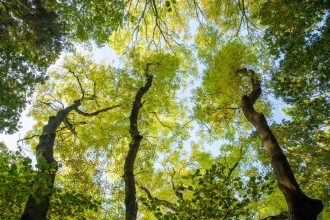 A canopy shot taken at Gamlingay Woods