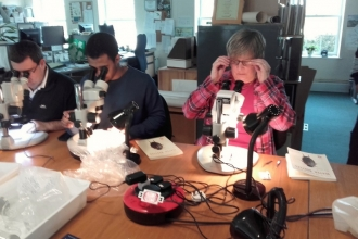 Volunteers conducting a survey with microscopes