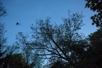 A dusk shot of the sky with a bat flying over