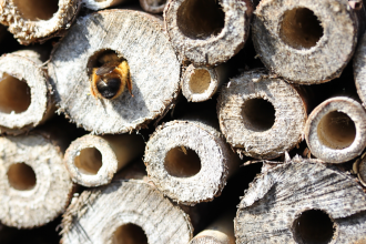 A bee enters a tube in a bug hotel