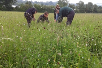 Surveyors count the flowers in Boddington meadow