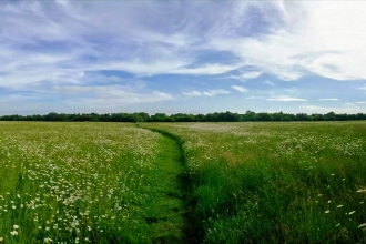 Meadow in Cambourne Nature Reserve