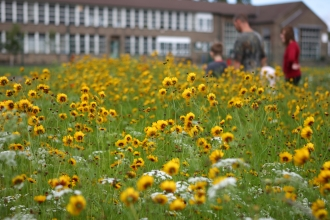 A patch of yellow flowers in front of a building with people looking at them in the blurred distance