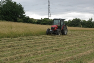 Cutting the Hayfield, Blow's Downs, Beds by Esther Clarke