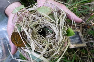 A dormouse nest being held by a volunteer