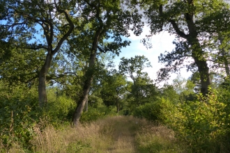 Oak trees and coppice plots at Hayley Wood