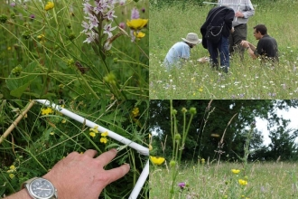 Grassland surveys