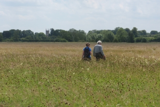 NIA Land Advisor at Achurch Meadow