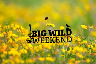 Big WIld Weekend logo
