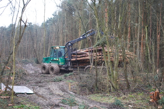Conifer removal at Brampton Wood