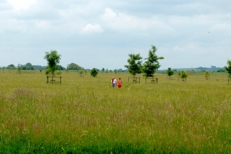Trumpington Meadows by Caroline Fitton
