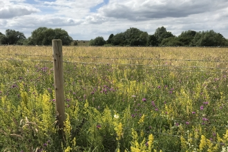 Wildflowers in bloom at Trumpington Meadows