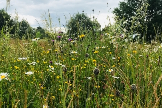 Flower-rich habitat at Trumpington Meadows