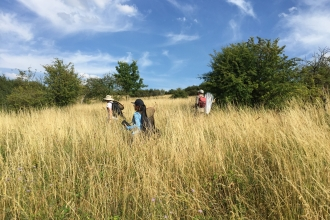 Butterfly surveys at Blows Downs