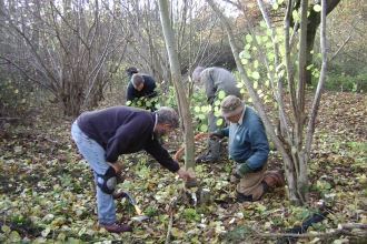 coppicing vols