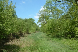Image of Kings Wood