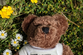 Teddy in the grass by Rebecca Neal