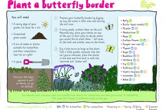 Butterfly Border Activity Sheet