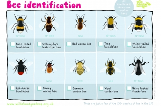 Bee ID Sheet