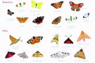 Butterfly and Moth ID Sheet