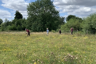 A group of people including staff and volunteers pull ragwort at Trumpington Meadows