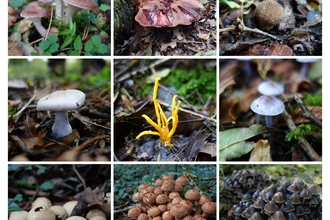 Fungal Foray at King's Wood
