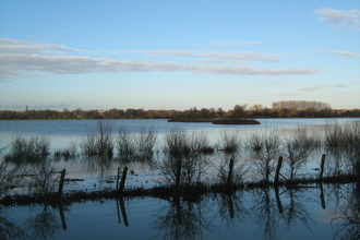 Godmanchester nature reserve is on a floodplain