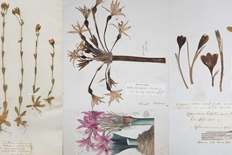 300 years of fieldwork: the plants of Cambridgeshire & the World in 1 room!