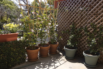 Balcony planting with pots and trellis