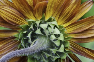 Sunflower by Paul Harris/2020VISION
