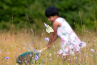 A child with a sweep net out of focus in the background of a butterfly