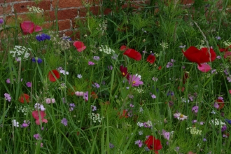 Garden meadow in bloom with reds, whites, pinks and purples on show against a brick wall