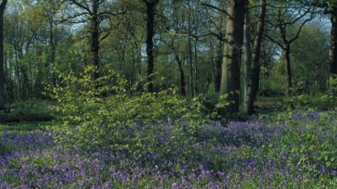 Thorpe Wood credit. Peter Wakely / English Nature
