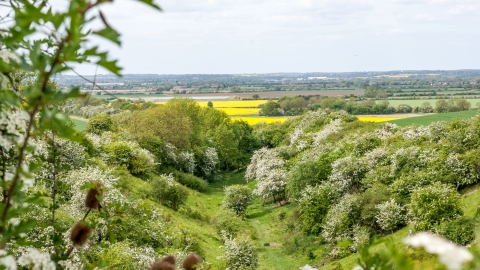 A view from Old Warden Tunnel with oilseed rape and hawthorn blooming
