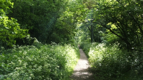 Woodland path in Kings's Wood in Northamptonshire