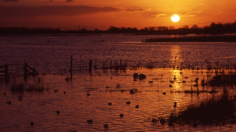 sunset Ouse Washes credit. Gary Dean