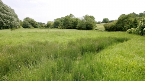 Wansford Pasture credit. Wildlife Trust BCN