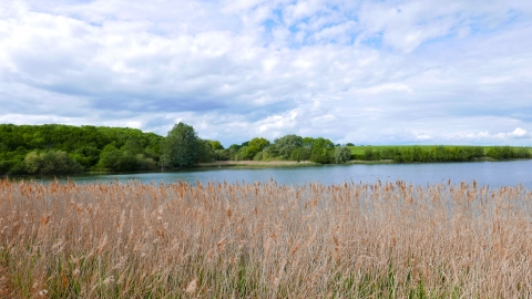 Reedbeds at Grafham Water