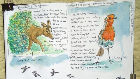 A page from a Nature Journal by Sharon Williamson