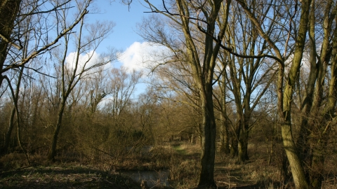 Image of trees at Begwary Brook