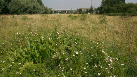 Image of Glebe Meadow