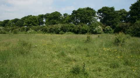 Image of Lancot Meadow