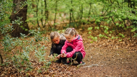 Children in the woods by Helena Dolby for Sheffield & Rotherham Wildlife Trust