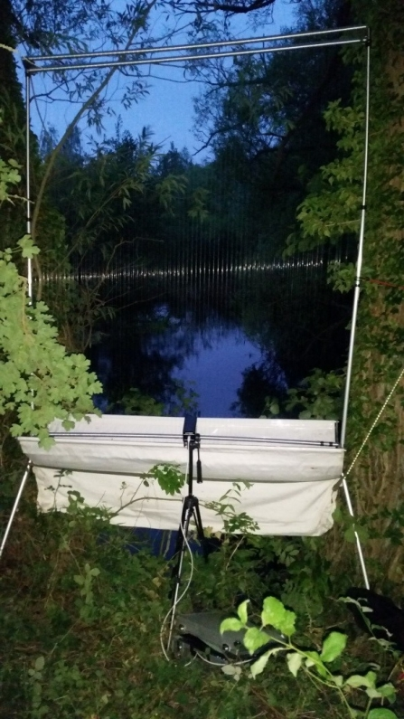 Harp trap for bats set up in dusk