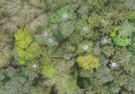 Heron nests from above photographed by a drone